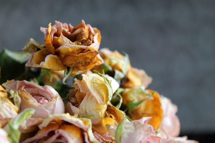 flower-1225810_1920